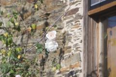 Detalle do rosal no xardín