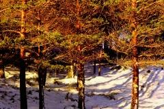 Nieve en la devesa Rogueira